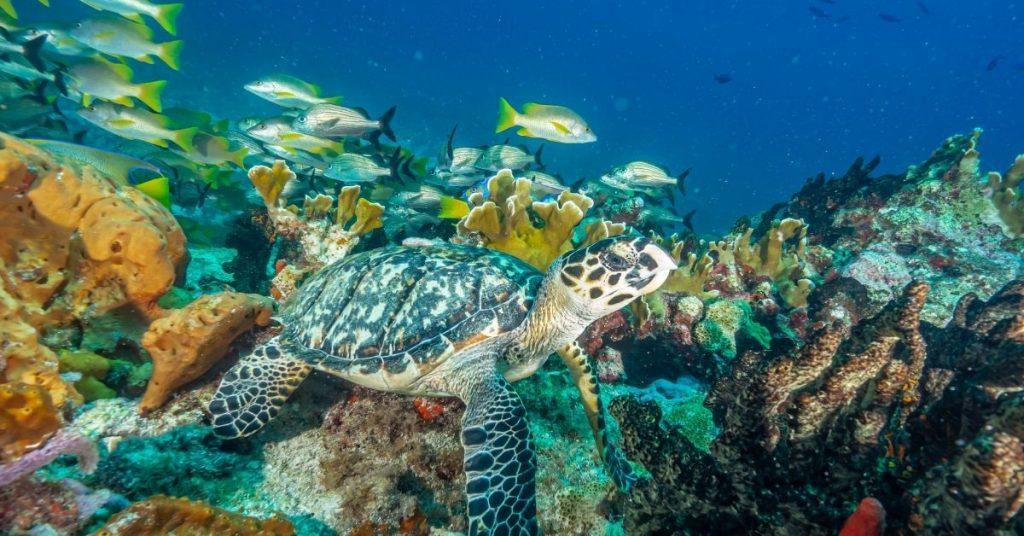 Actividades acuáticas Isla Mujeres