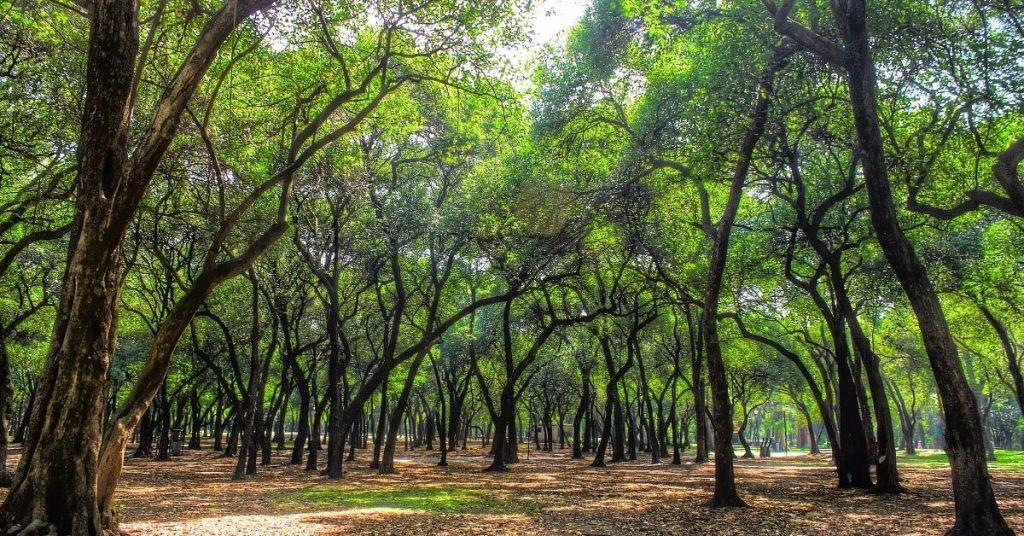 Paseo Bosque de Chapultepec